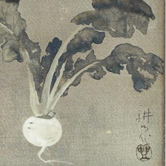 山村耕花 かぶら(仮題) YAMAMURA, KŌKA RADISH (SUGGESTED TITLE)